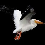 pelican94's Photo