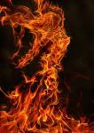 FieryFire's Photo
