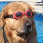 DoggoArt's Photo